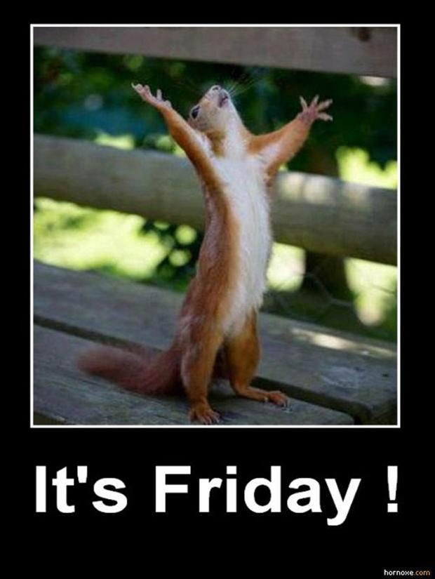its-friday-squirrel-funny-pictures