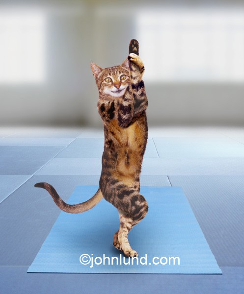 Funny-cat-yoga-tree-pose