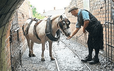 Najdłużej pracujący Pit Pony.