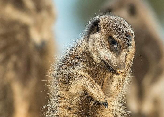 comedy-wildlife-photography-awards-best-photos-2016-11