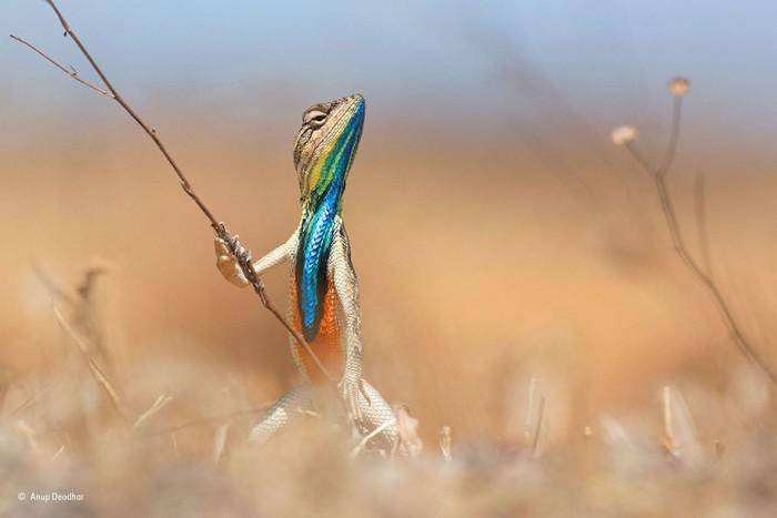 comedy-wildlife-photography-awards-best-photos-2016-18